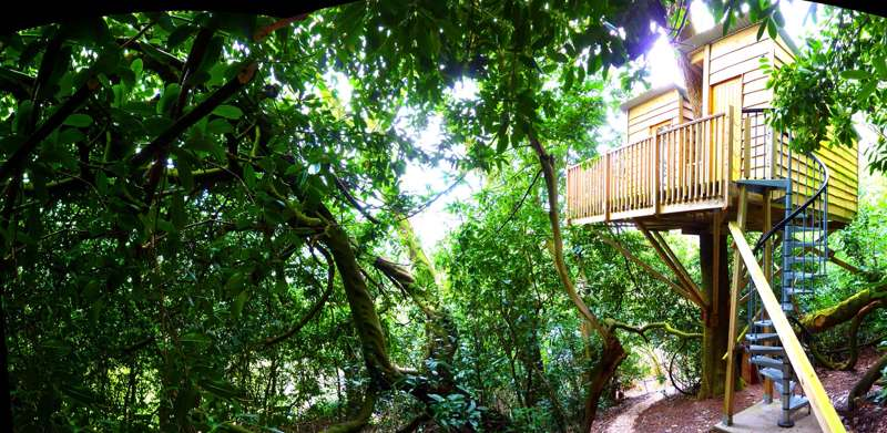 The Nest Treehouse The Nest Nr Honiton Devon EX14