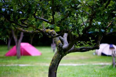 Camping La Isla Picos de Europa 39586 Turieno, Potes, Cantabria, Spain