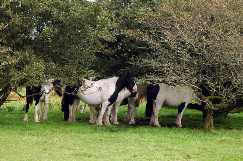 Campsites Near Bodmin Moor