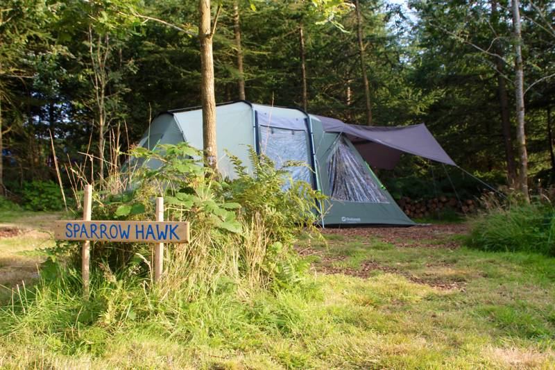 Derwen Woodland Camping Pitch