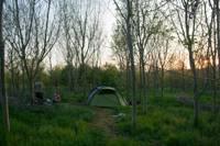 4m x 5m   Woodland pitch No.9