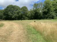 Hazel Grass Pitch 1