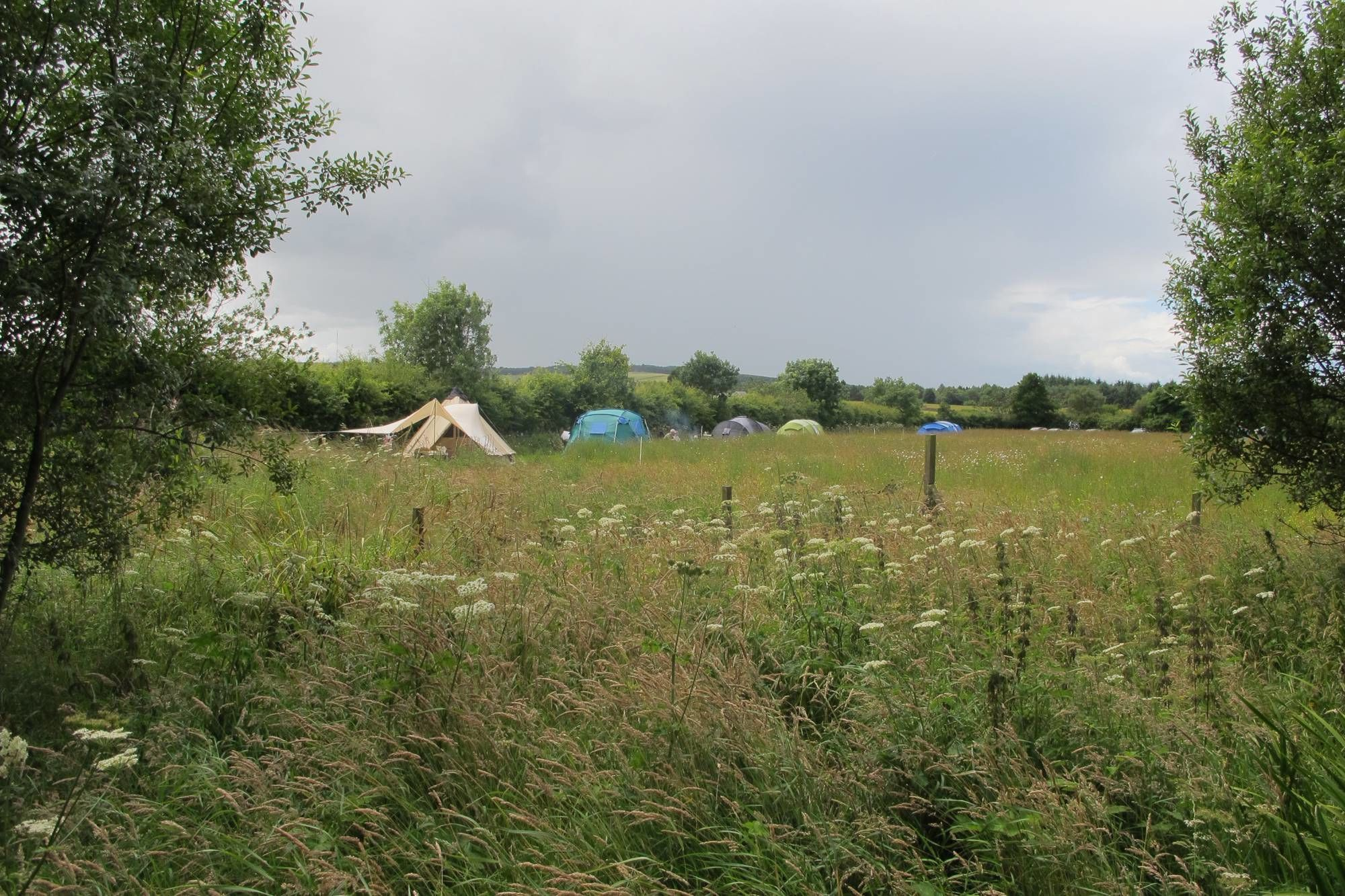 Glamping and camping in five gorgeous acres of wild flower meadow in Eastern Scotland.