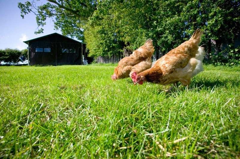 Glanmor Isaf Farm