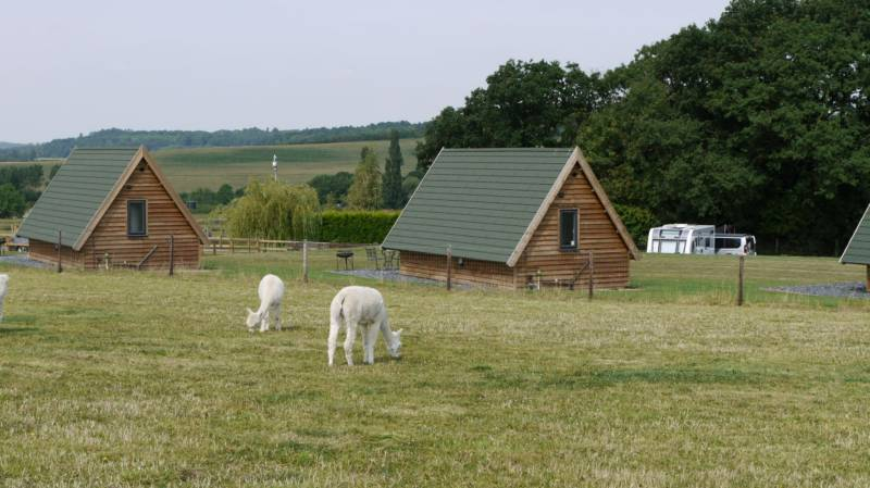 The glamping cabins (and alpacas!) at Midshires Way Campsite in Leicestershire.