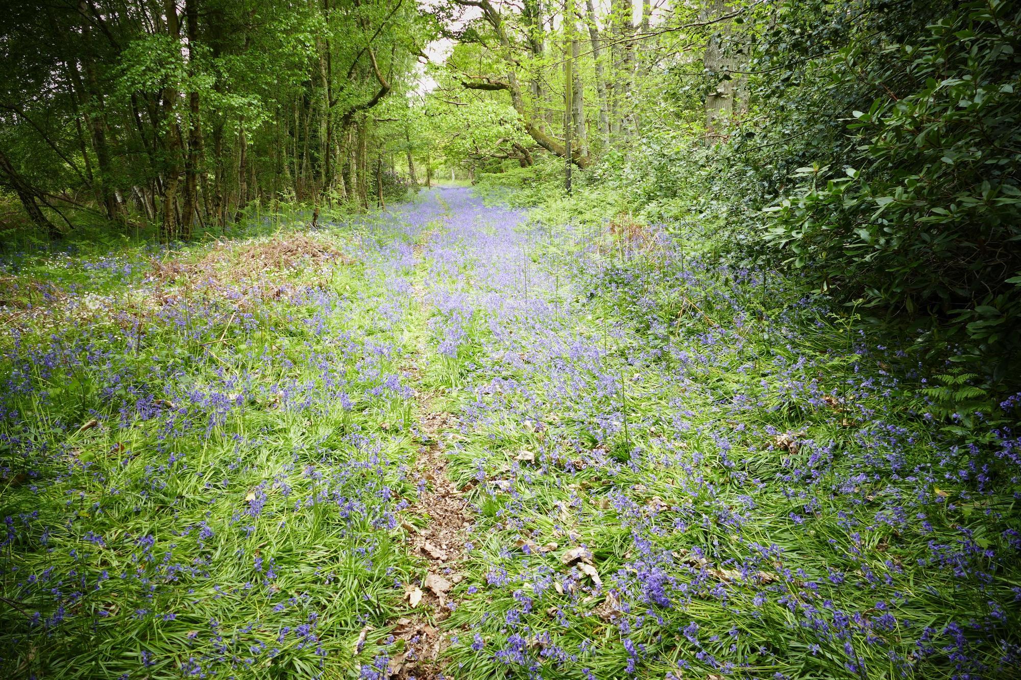 Hailsham Camping | Best campsites in Hailsham, Sussex