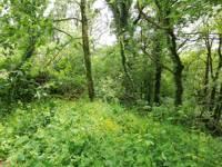 Woodland Edge (tent/campervan pitch)