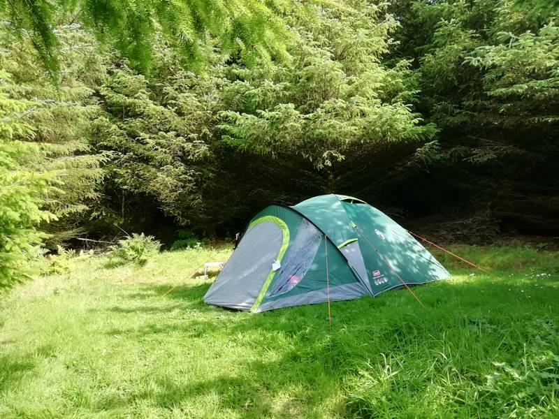 Woodland Small tent pitch (no EHU). No view.