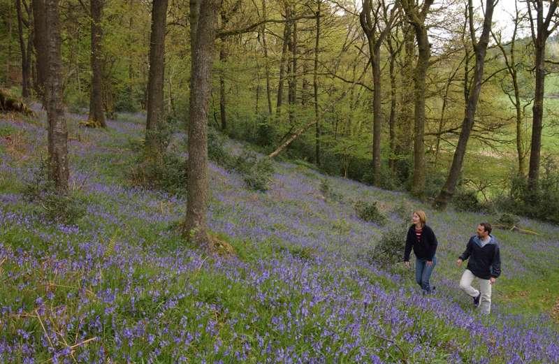 Bluebell Walks