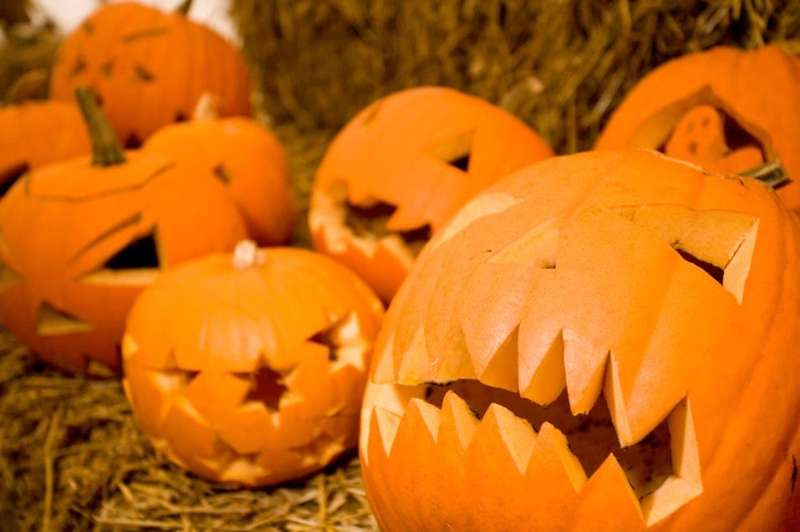 Bumps in the Night: Halloween Happenings