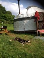 Harmony Yurt