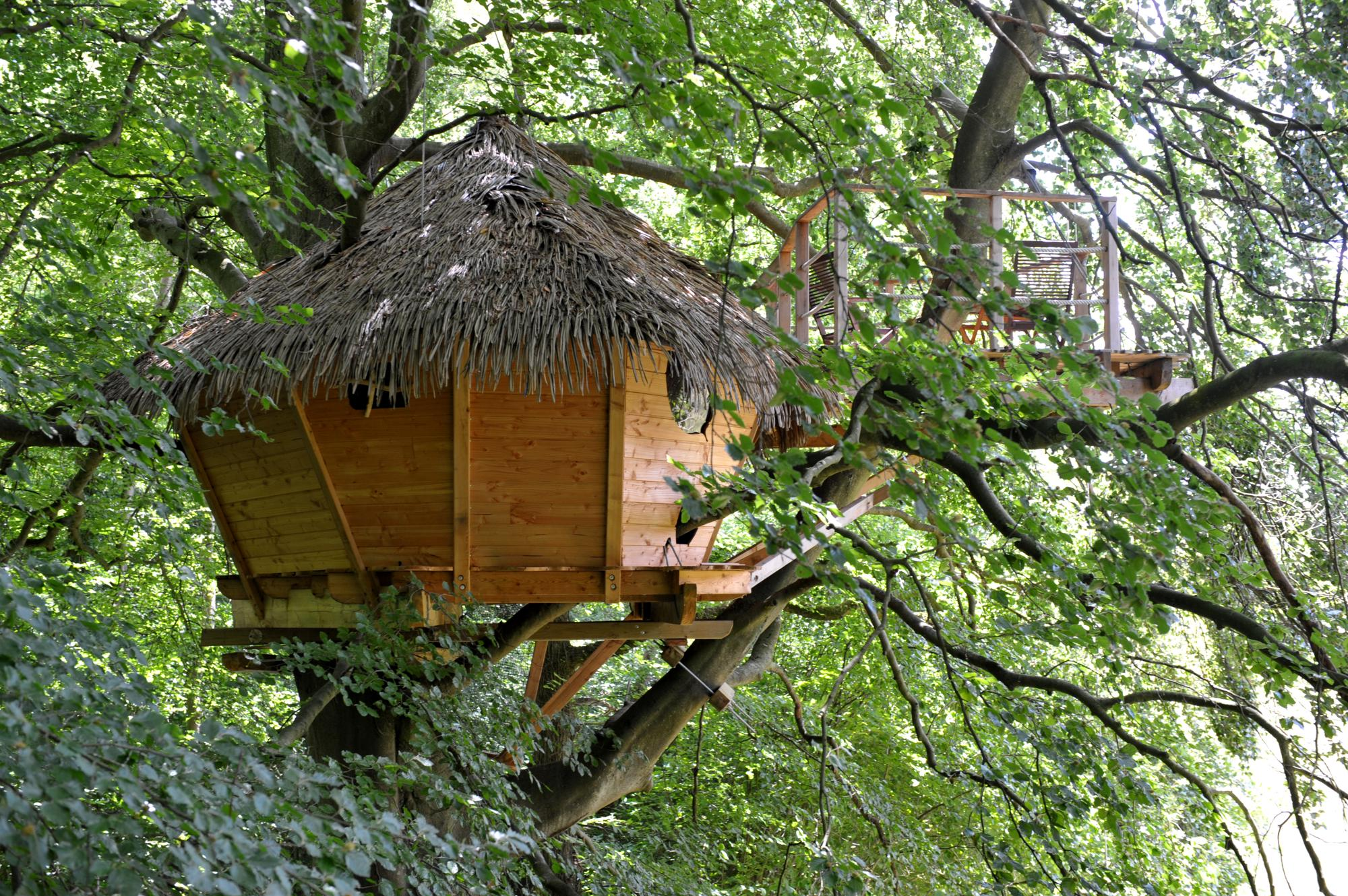 Glamping in Tree house holidays at Cool Camping