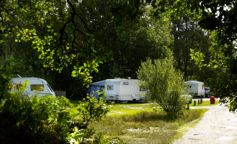 Caravan's parked at a forestry commission campsite in the New Forest National Park.
