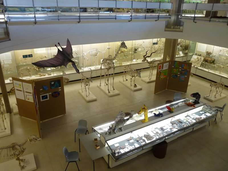 University Museum of Zoology