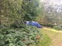 Forest Tent Pitch