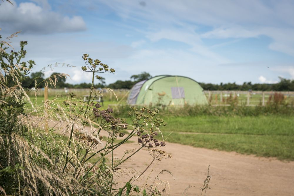 A rural tent-only Somerset campsite, in a top location for visits to Bath, Salisbury and Frome.
