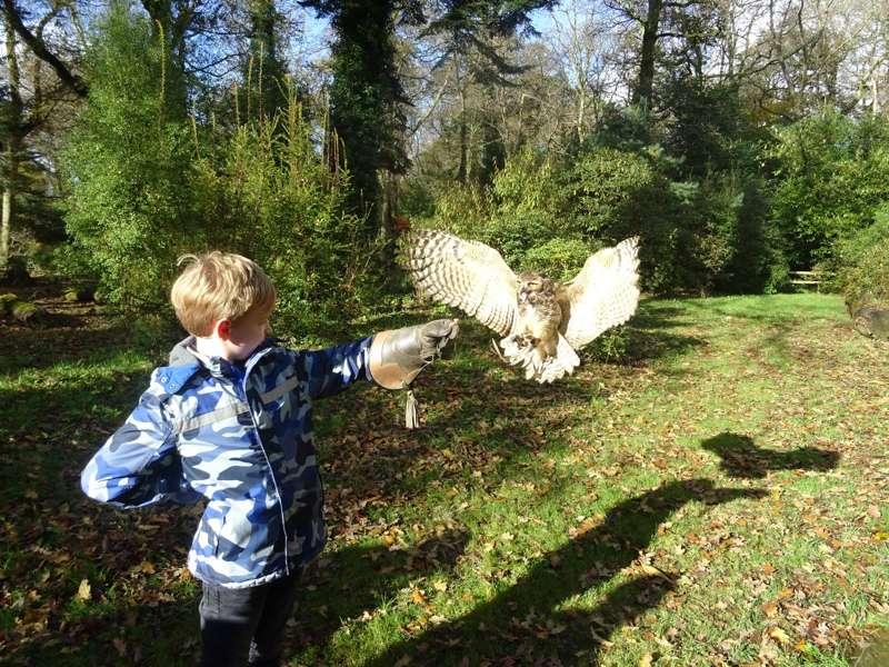 The Secret Owl Garden, Pembrokeshire