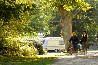 Hollands Wood Campsite Lyndhurst Road, Brockenhurst, Hampshire SO42 7QH