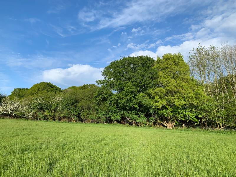 Hawthorn Grass Pitches