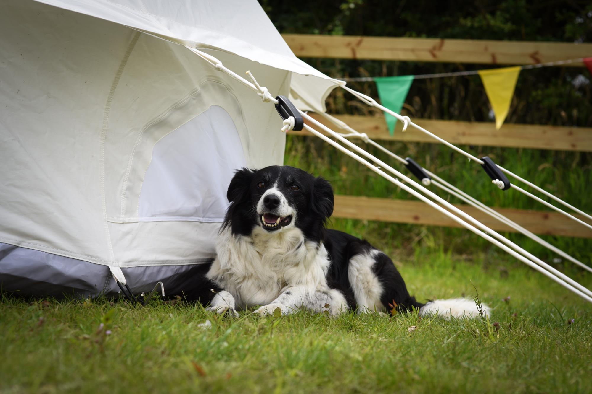 Dog-friendly campsites in Norfolk