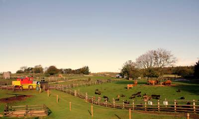 Animal-tastic site nestled on top of the Cotswolds... gold dust in this neck of the woods.