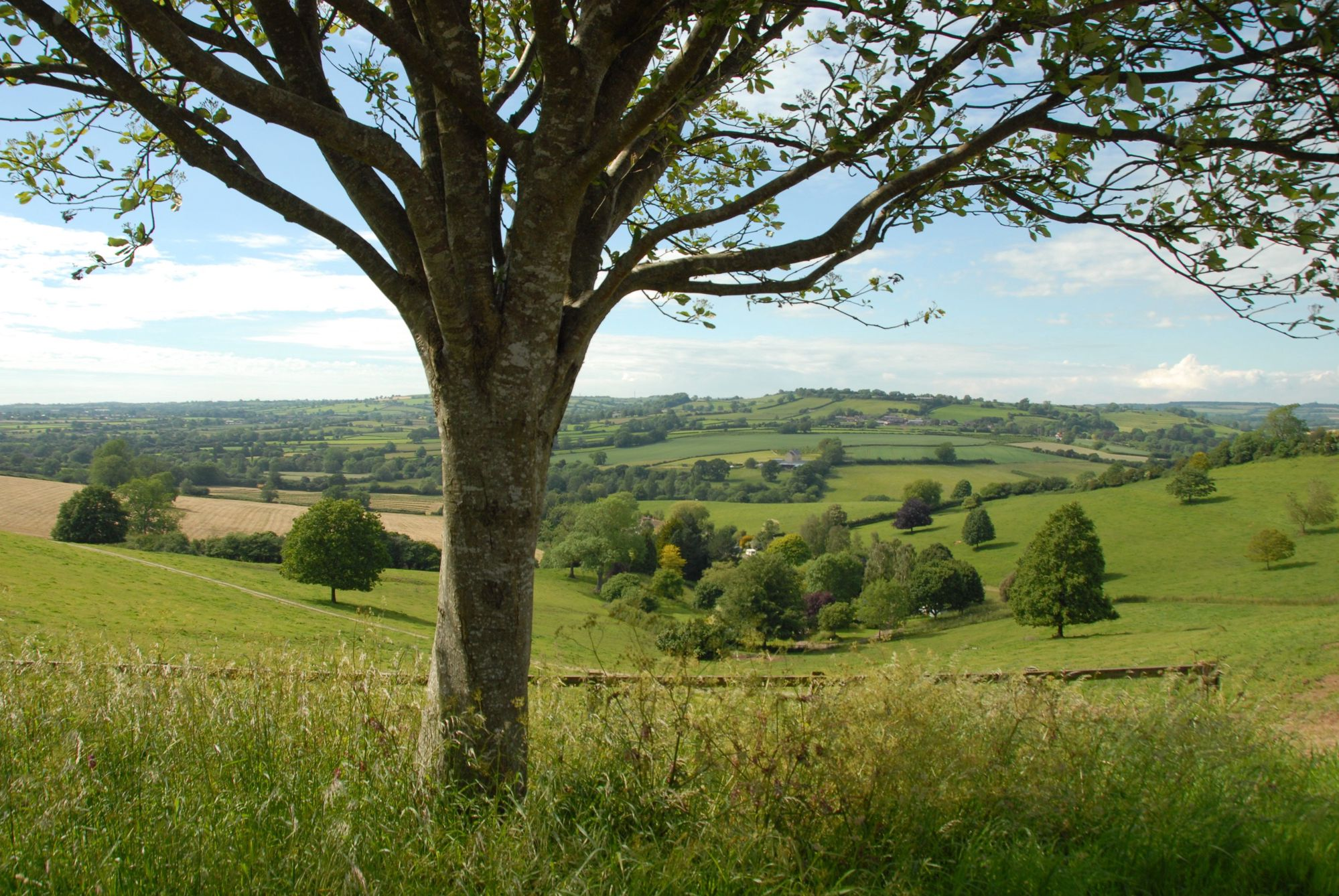 Campsites in Shepton Mallet – I Love This Campsite