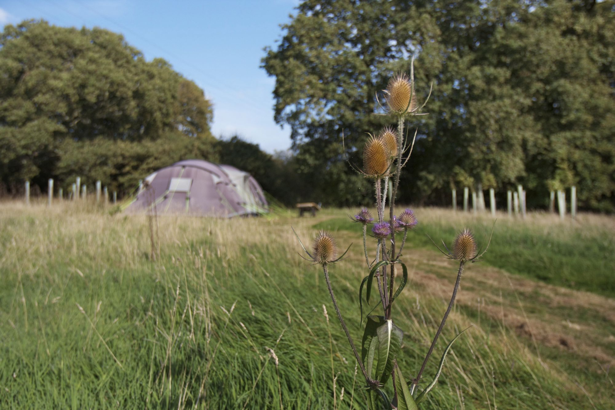 Camping with children - family friendly holidays