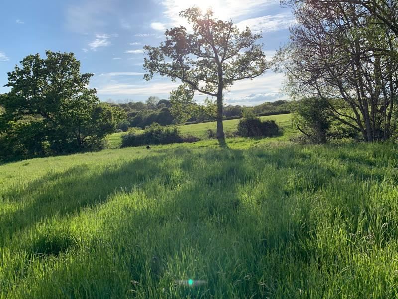 Star Field Camping Charity Farm, Swattenden Lane, Cranbrook, Kent TN17 3PS