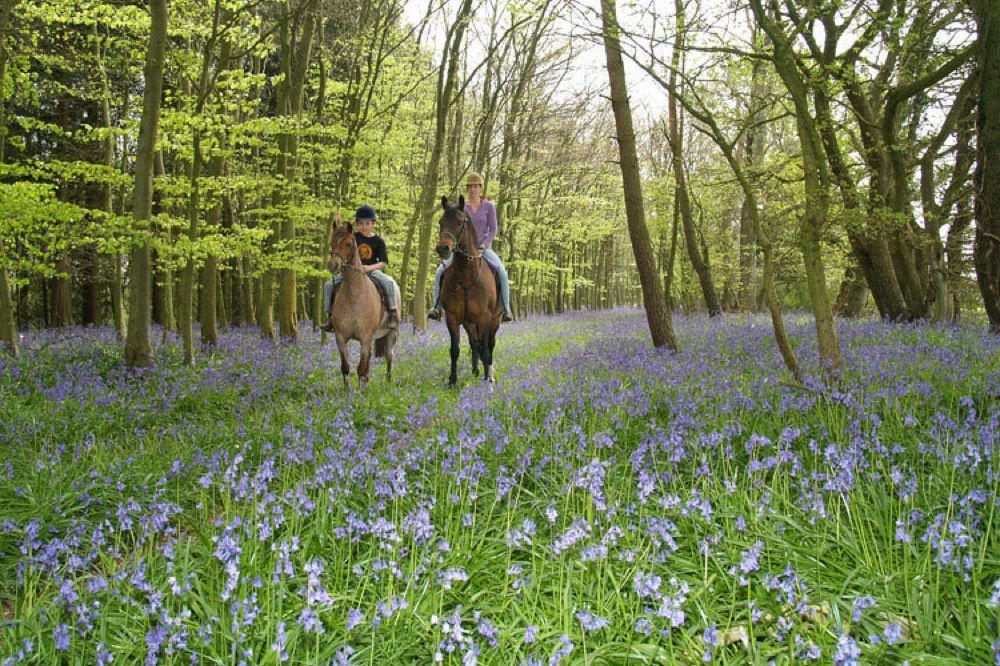 Hotels, Cottages, B&Bs & Glamping in the New Forest - Cool Places to Stay in the UK