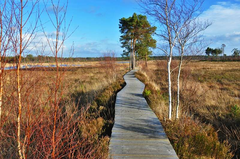 Thursley Common & National Nature Reserve