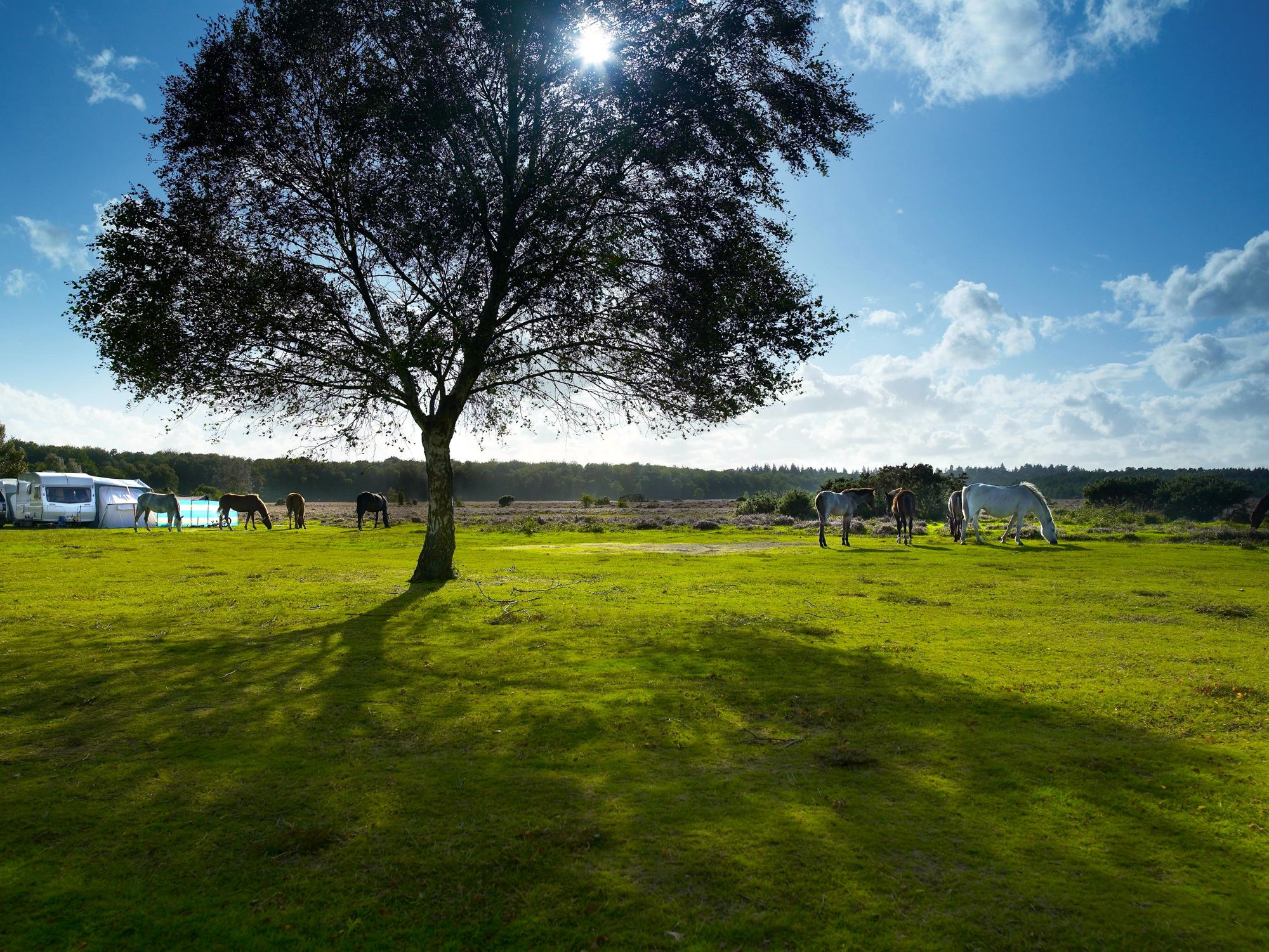 Set in a heathland clearing, bordered by Ober Water and the snaking Blackwater Stream, Aldridge Hill is a back-to-basics, traditional camping experience.