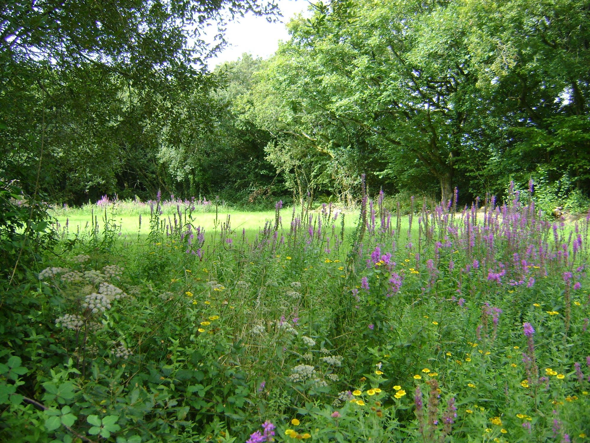 Meadow pitch  with summer wild flowers