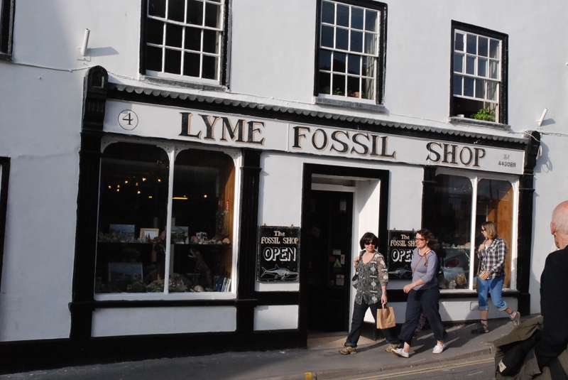 Lyme Fossil Shop